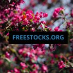 15 Stunning Sites With Free Amazing Stock Photos 2019