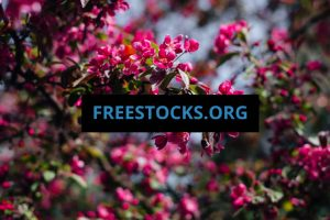 15 Stunning Sites To Get Free Amazing Stock Photos (2019) | Help